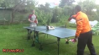 Коты играют в тенис