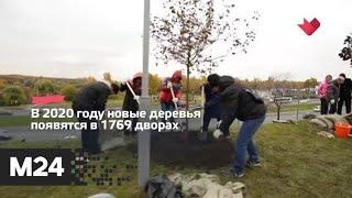 """""""Это наш город"""": москвичи определят, какие дворы нужно озеленить - Москва 24"""