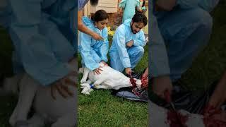 Goat Sacrifice Eid Ul Adha 2019 - DFW Texas