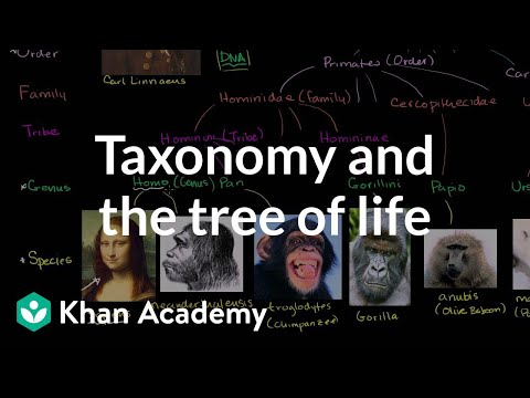 Taxonomy and the Tree of Life