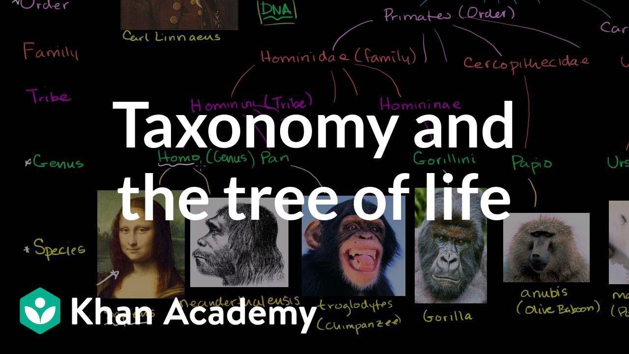 Taxonomy - SBI 3U: Biology
