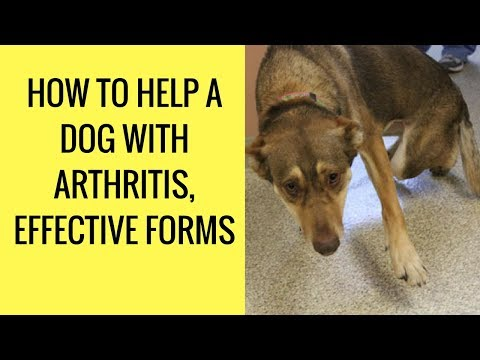 how-to-help-a-dog-with-arthritis,-effective-forms