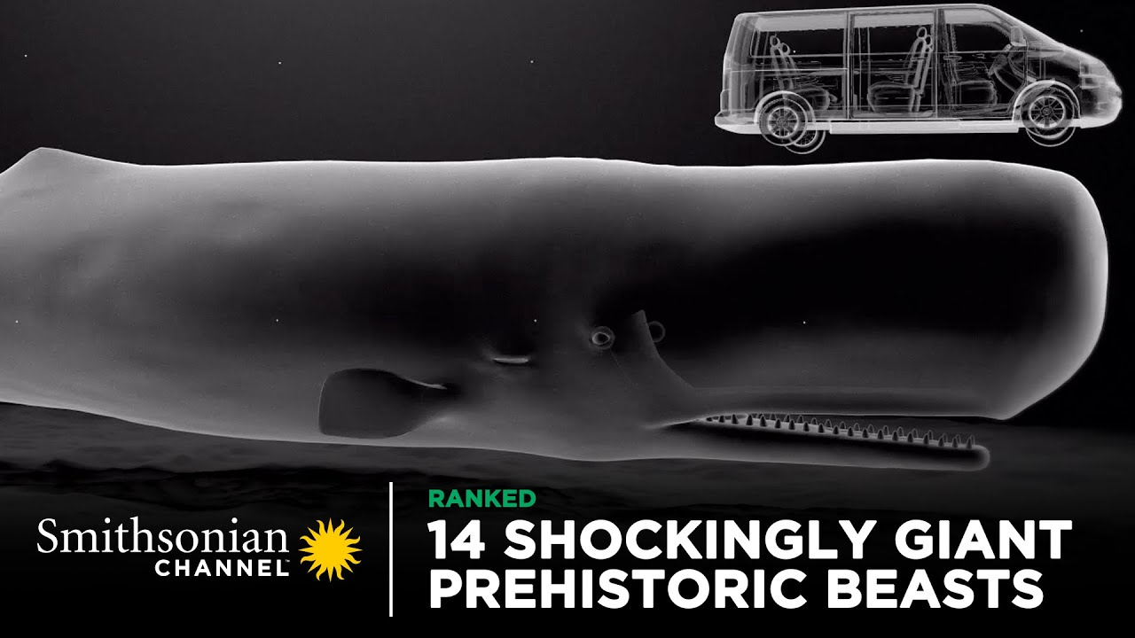 Download 14 Shockingly Giant Prehistoric Beasts 🐋 Smithsonian Channel