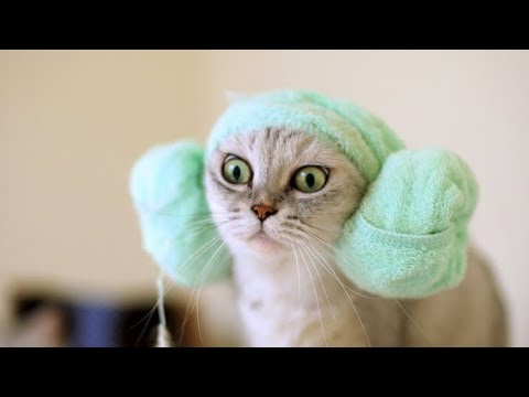 Funny cute dogs and cats videos - funny animals compilation 2020