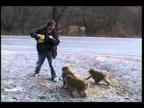Tom Green Subway Monkey Hour (Sub Español)