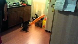 Scared cat balloon attack
