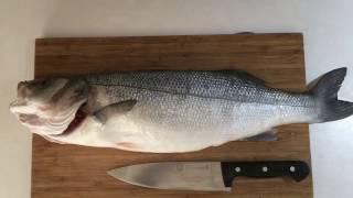 Levrek Fileto Çıkarmak 2200gr (Sea Bass Fillet) I Yasin Yıldız