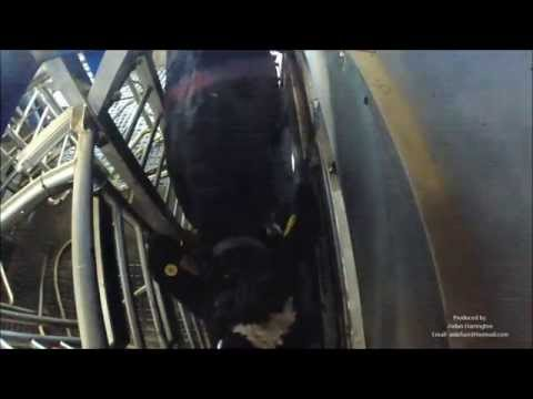 Delaval VMS Robotic Milking and ABC Grazing in Kerry, Ireland.