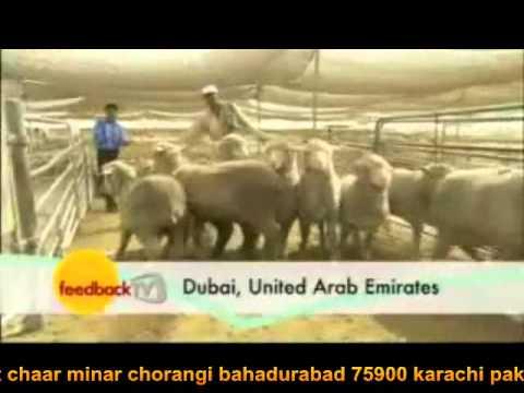 Market of Australian  trade- Export of goat from almasoomtrade