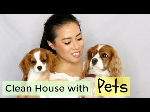 How To: Keep a Clean House with Pets | Herky & Milton the Cavaliers