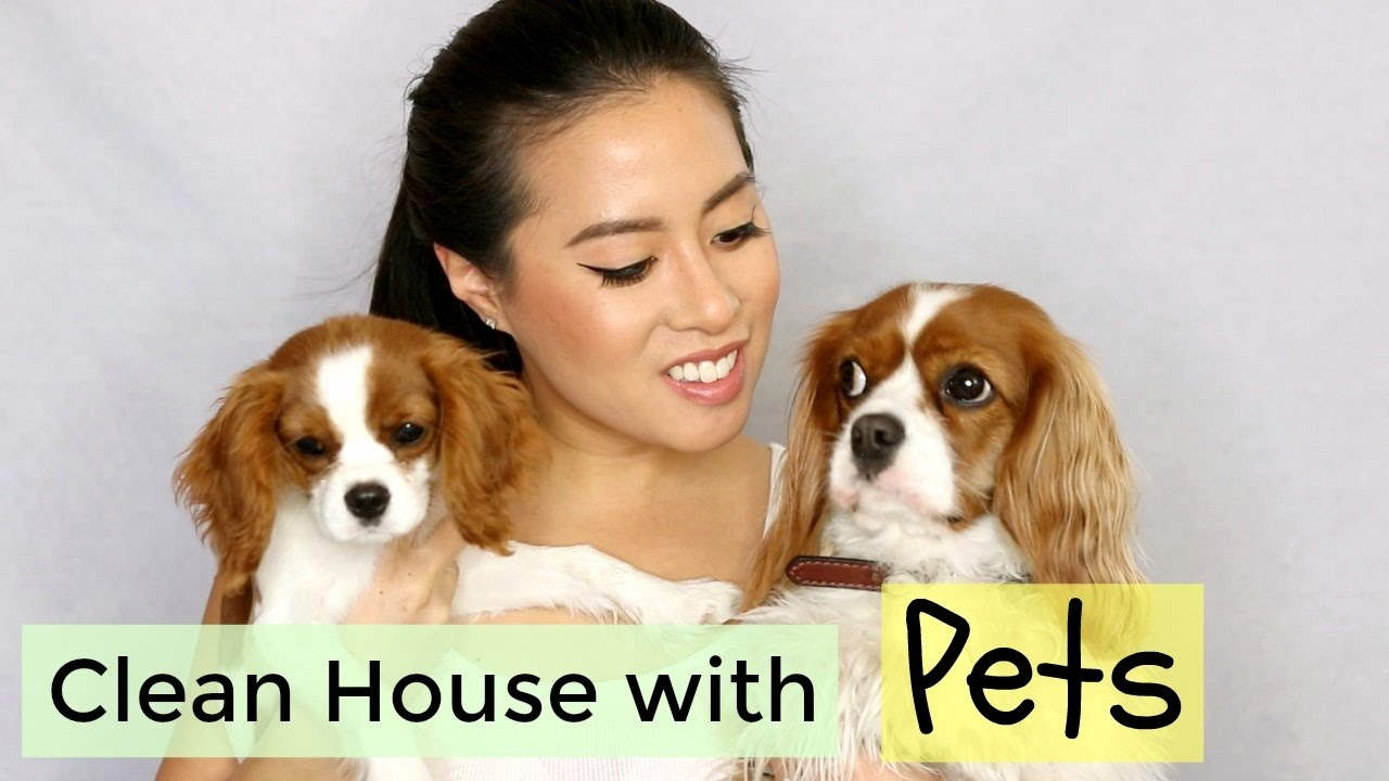 How To Keep A Clean House With Pets Herky Milton The