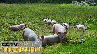 [国际财经报道]热点扫描 多部门出台措施 支持生猪生产发展| CCTV财经