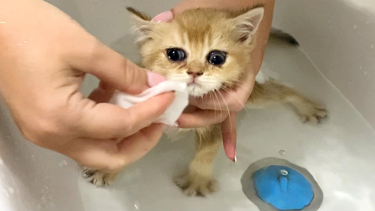 First Bath for adopted kitten in our house and her life with a new mom cat