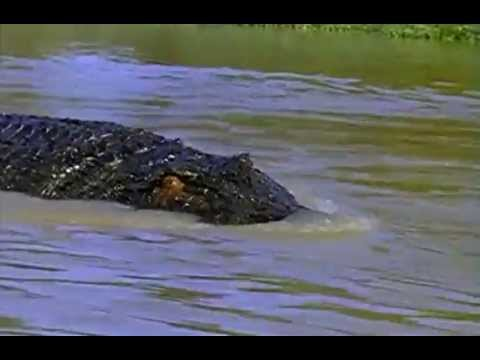 crocodile 2 death swamp ending a relationship