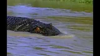 Killer Crocodile 2 (1990) - Can you spot the toy crocodile?