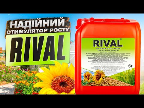 ЯК ЦЕ ПРАЦЮЄ: RIVAL® – адаптоген та стимулятор   КАК ЭТО РАБОТАЕТ – RIVAL – адаптоген и стимулятор
