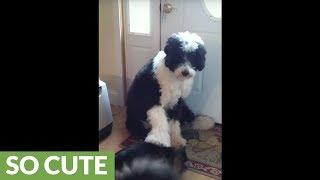 Friendly dog pets cat on command