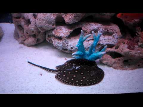 Аквариумные рыбки и растения - Все о аквариумных рыбках и
