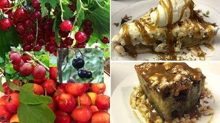 PICK and COOK Wild Berries and Apples!!! Recipes!!! FORAGING! Superfood.