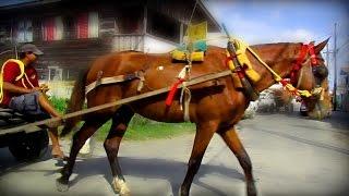 Horse Cart | Guyana 2015