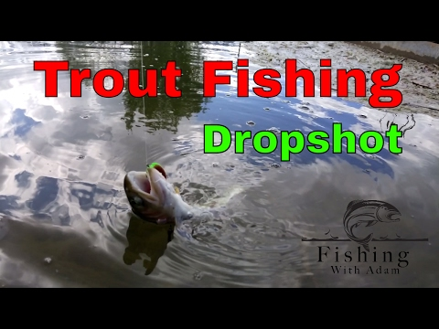 How To Catch Trout Using Bass Techniques   Dropshot Technique