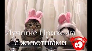 Лучшие приколы с животными за день (Coub) / Best Animal Funny Videos
