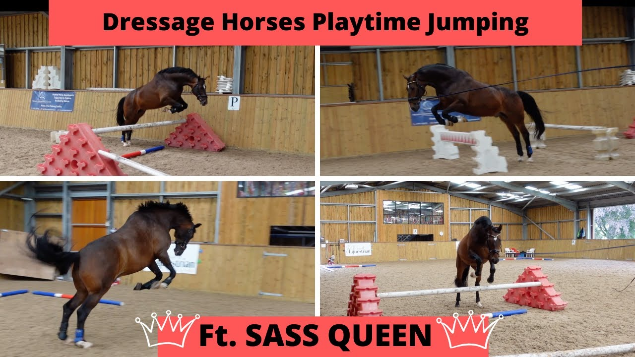 Dressage Horses Playtime Jumping Ft. Sass Queen | OT Vlog