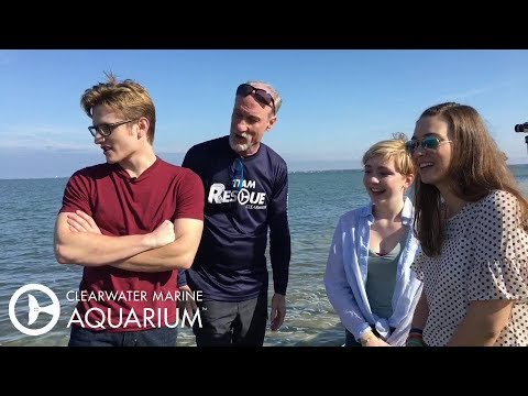 The Dolphin Tale Stars Help Release 3 Sea Turtles