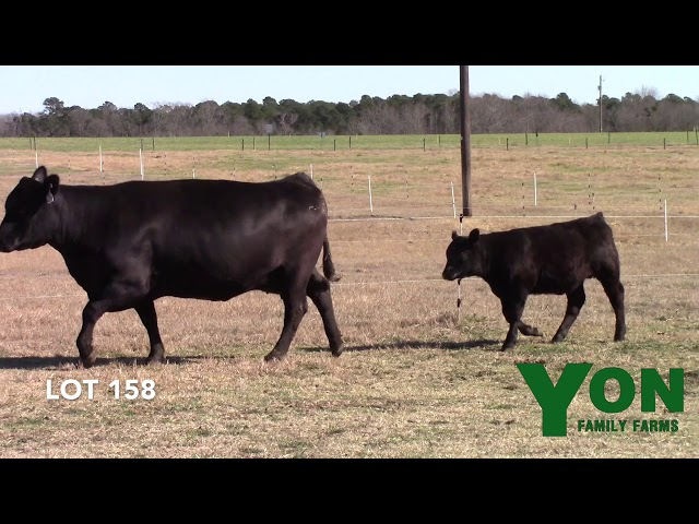 Yon Family Farms Lot 158