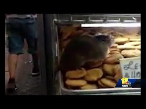 Video captures rat crawling on baked goods in Lexington Market