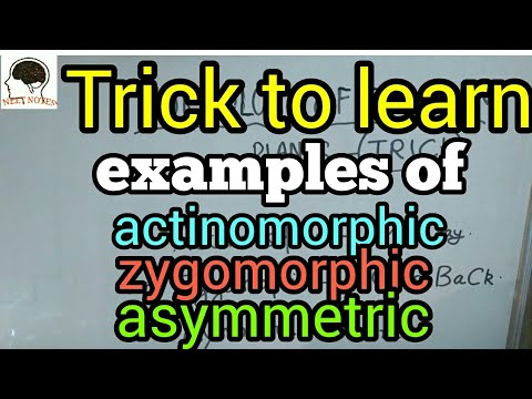 trick to learn actinomorphic zygomorphic asymmetric examples morphology of flowering plant biology