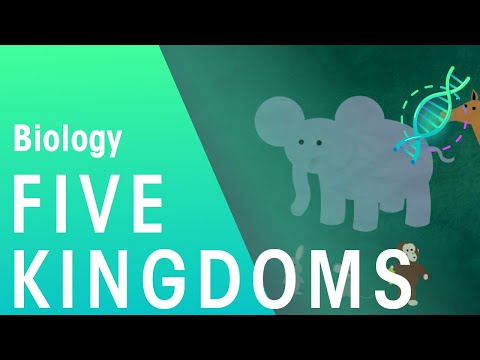 The 5 Kingdoms in Classification | Biology for All | FuseSchool