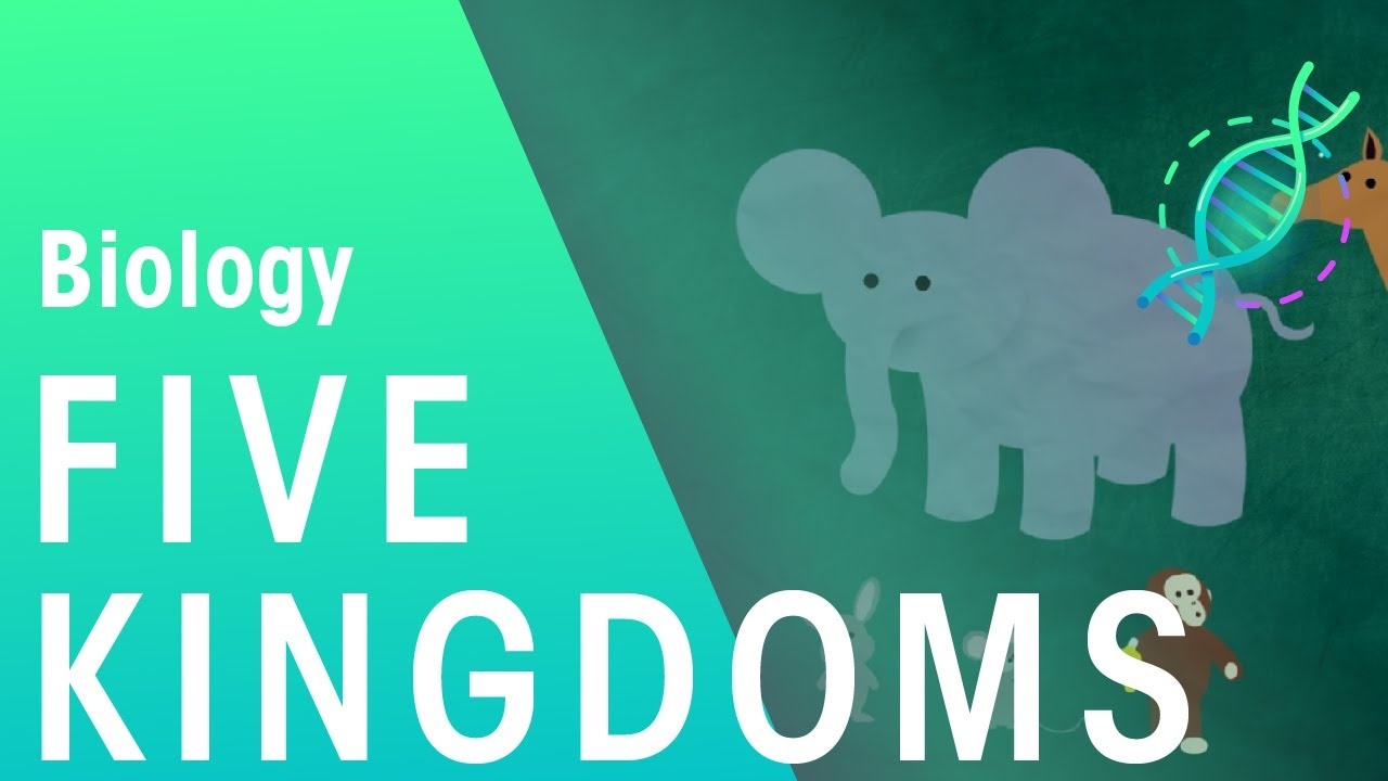 medium resolution of The 5 Kingdoms in Classification   Evolution   Biology   FuseSchool -  YouTube