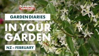 Gardening in February | New Zealand | Bunnings Garden Diary