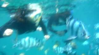 青の洞窟も楽しいけど、真栄田岬の大きなツバメ魚やカラフルなブダイに...
