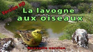 La lavogne aux oiseaux - Version Full-HD
