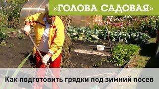Голова садовая - Как подготовить грядки подзимний посев
