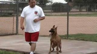Dog Squad - Boundary Training