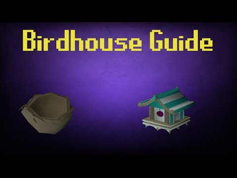 OSRS Fossil Island Birdhouse run guide (4K + Hunter XP/ 6+ Nests per run)