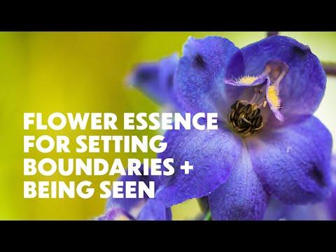 WILD DELPHINIUM FLOWER ESSENCE | Embody your exquisite self.