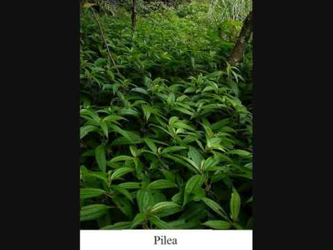 Plantas ornamentales youtube for Plantas ornamentales venezolanas