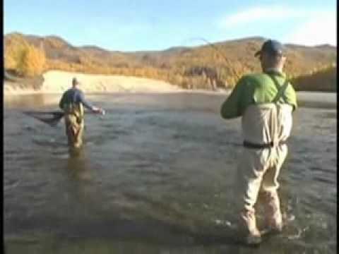 Loài cá hồi khổng lồ sống ở Mông Cổ.flv