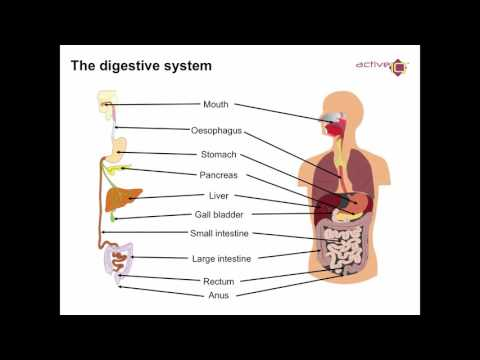 Principles Of Nutrition Lesson A HD
