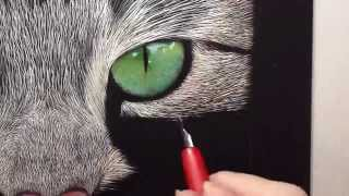 Incredible Tabby Cat Scratch Board Speed Drawing
