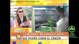 Moringa en Chile. Reportaje TV LA Red