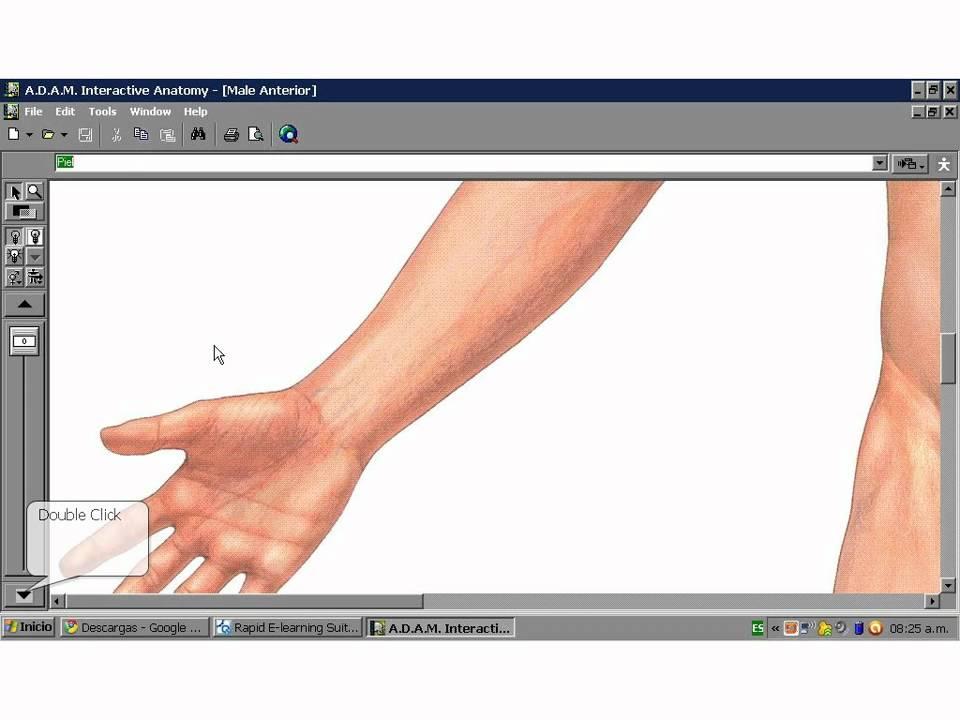 Como Usar Adams Interactive Anatomy4 Youtube