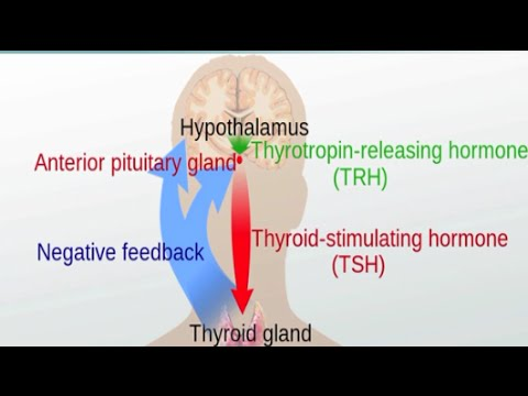 Graves' Disease and Hashimoto's Thyroiditis