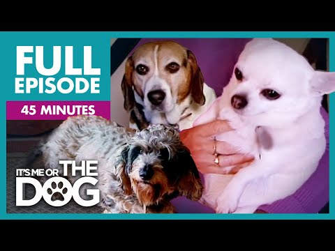 The Chunky Trio: Overweight Dogs Special   Full Episode   It's Me or the Dog
