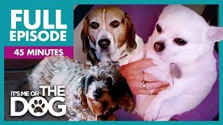 The Chunky Trio: Overweight Dogs Special | Full Episode | It's Me or the Dog