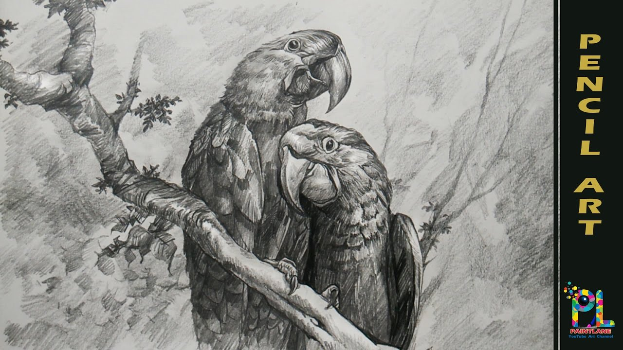 Parrots on a branch with pencil drawing shading